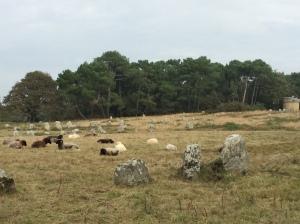But there were sheep! The lawnmowers were slacking: napping on the job.