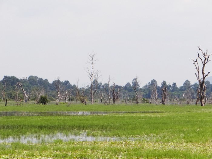 The moat at Baray
