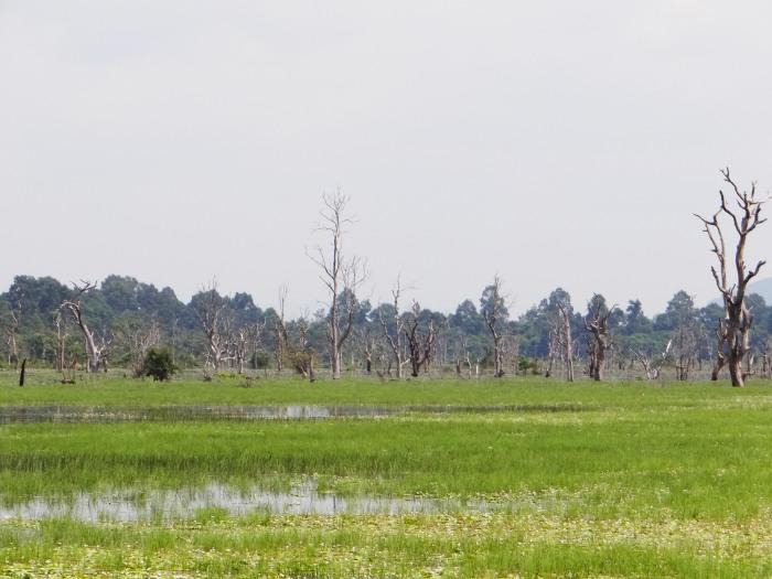 The moat at Baray