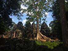 Banteay Kdei Angkor Temple Tree