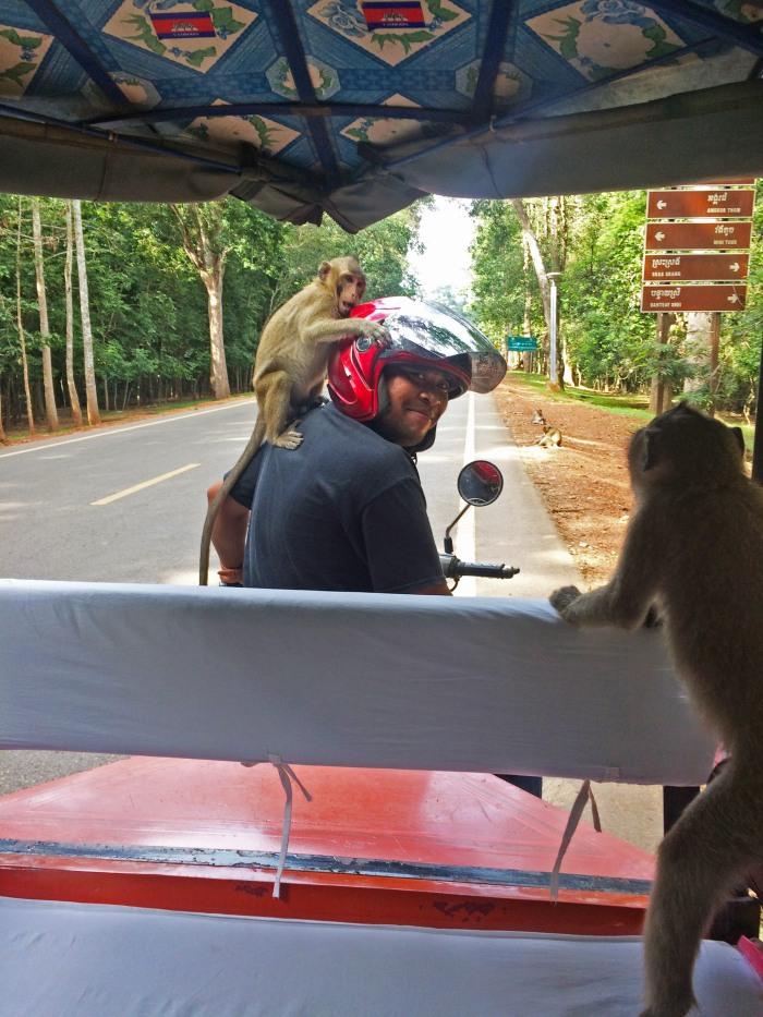 monkeys sitting on a motorcycle