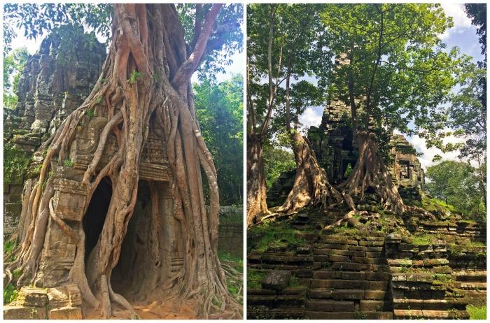 angkor wat tree temples ta prohm