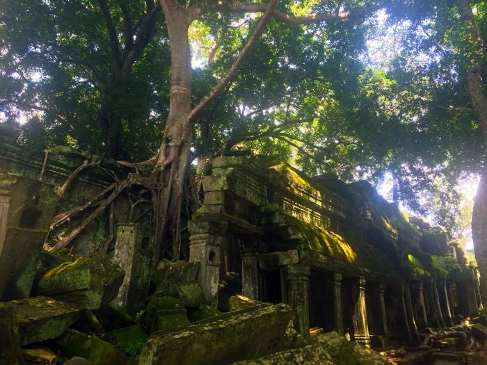 ta-prohm-angkor-temple-tree-temple