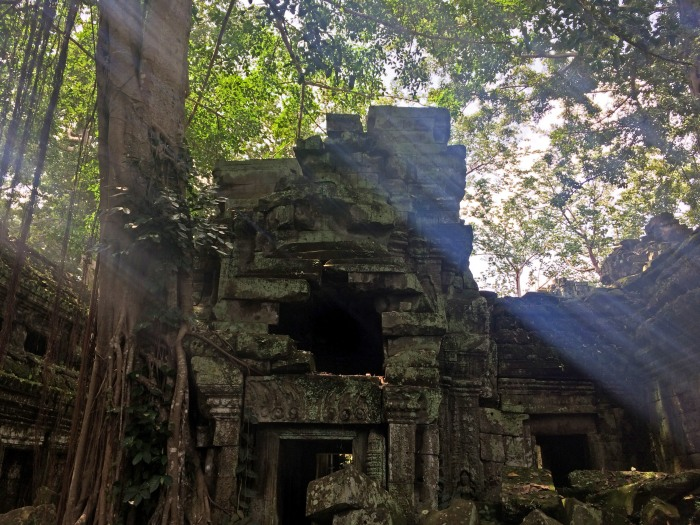 ta prohm angkor tree temple