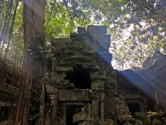 ta prohm angkor tree temple